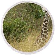 Young Giraffe In Kenya Round Beach Towel