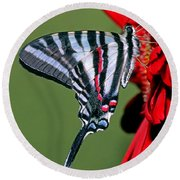 Zebra Swallowtail Butterfly Round Beach Towel