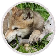 Gray Wolf Pup Round Beach Towel