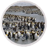 King Penguins Round Beach Towel