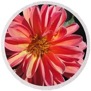 Dahlia From The Showpiece Mix Round Beach Towel