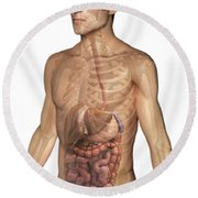 The Digestive System Round Beach Towel