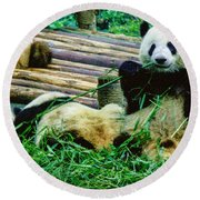 3722-panda -  Colored Photo 1 Round Beach Towel