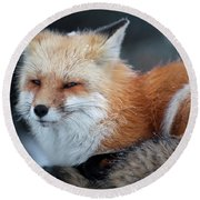 A Red Fox  On The Summit Of Mt Round Beach Towel