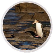 Adult Nz Yellow-eyed Penguin Or Hoiho On Shore Round Beach Towel