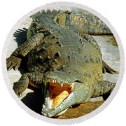 American Crocodile Round Beach Towel