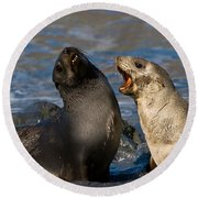 Antarctic Fur Seals Round Beach Towel
