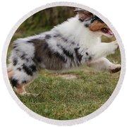 Australian Shepherd Puppy Round Beach Towel