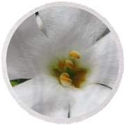 Bacopa Named Snowtopia Round Beach Towel