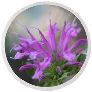 Bee Balm From The Panorama Mix Round Beach Towel
