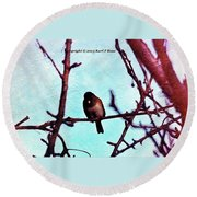 Bird In Tree Round Beach Towel