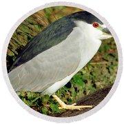 Black-crowned Night-heron Round Beach Towel