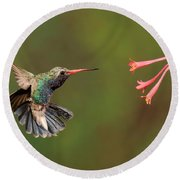 Broad Billed Hummingbird Round Beach Towel