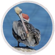 Brown Pelican Preening Round Beach Towel