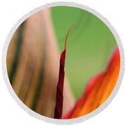 Canna Lily Named Durban Round Beach Towel