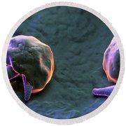 Cryptosporidium Round Beach Towel