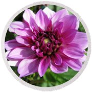 Dahlia Named Blue Bell Round Beach Towel