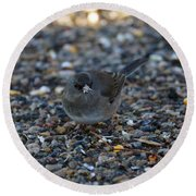 Dark Eyed Junco Round Beach Towel