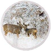 Doe Mule Deer In Snow Round Beach Towel