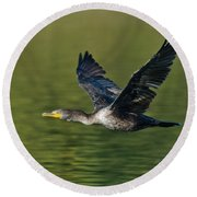 Double Crested Cormorant Round Beach Towel