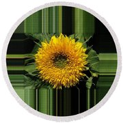 Dwarf Sunflower Named Teddy Bear Round Beach Towel