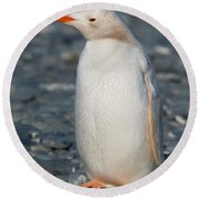 Gentoo Penguin Round Beach Towel
