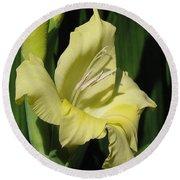 Gladiolus Named Nova Lux Round Beach Towel