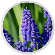 Grape Hyacinth Round Beach Towel