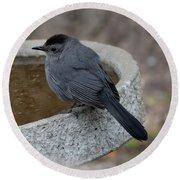 Grey Catbird Round Beach Towel