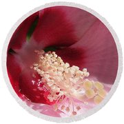 Hibiscus Moscheutos Named Luna Pink Swirl Round Beach Towel