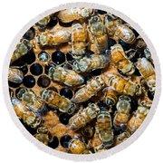 Honey Bees In Hive Round Beach Towel