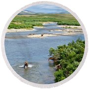 4-lay Of The Land Many Grizzly Bears In Moraine River In Katmai National Round Beach Towel