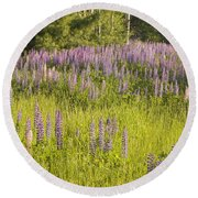 Maine Wild Lupine Flowers Round Beach Towel