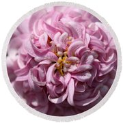 Marguerite Daisy Named Double Pink Round Beach Towel