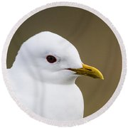 Mew Gull Round Beach Towel