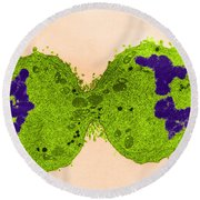 Mitosis, Late Telophase, Tem Round Beach Towel