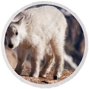 Mountain Goat Kid On Mount Evans Round Beach Towel
