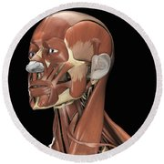 Muscles Of The Head And Neck Round Beach Towel