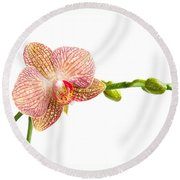 Orchid Flower Round Beach Towel