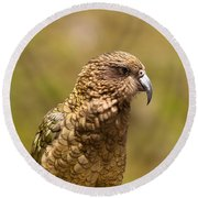 Portrait Of Nz Alpine Parrot Kea Nestor Notabilis Round Beach Towel