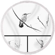 Ruby-throated Hummingbird - Immature Female - Black And White - Archilochus Colubris  Round Beach Towel