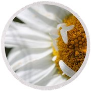 Shasta Daisy Named Paladin Round Beach Towel