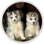 Siberian Husky Puppies Round Beach Towel