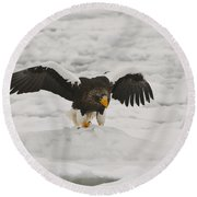 Stellers Sea Eagle Round Beach Towel