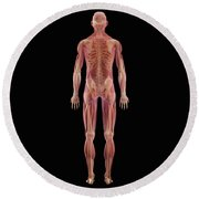 The Musculoskeletal System Round Beach Towel