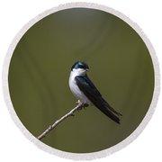 Tree Swallow Round Beach Towel