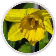 Trumpet Daffodil Named Exception Round Beach Towel