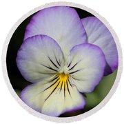 Viola Named Sorbet Lemon Blueberry Swirl Round Beach Towel