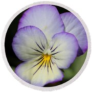 Viola Named Sorbet Lemon Blueberry Swirl Round Beach Towel by J McCombie