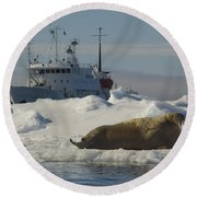 Walrus Resting On Ice Floe Round Beach Towel